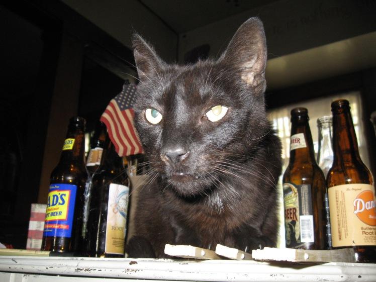 Root Beer Cat!