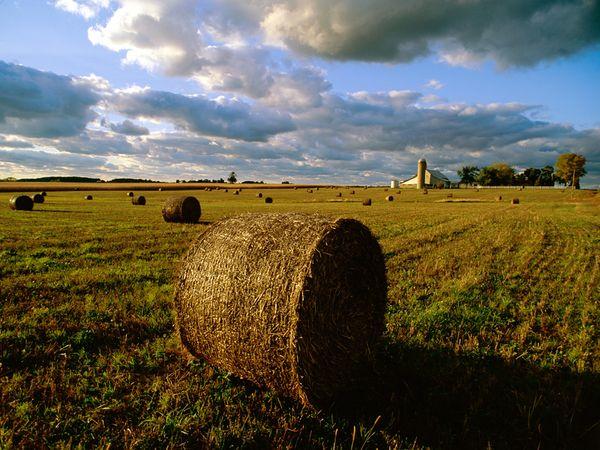 indiana-farm-hay_17625_600x450